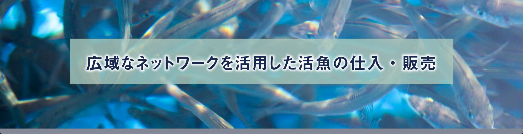 広域なネットワークを活用した活魚の仕入・販売